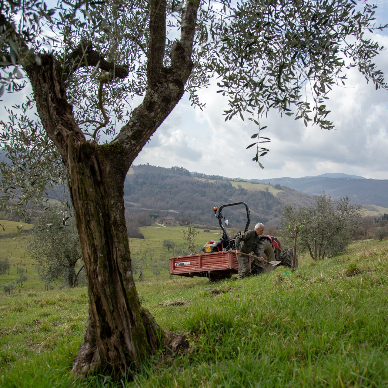 Oliveto-55-(1)